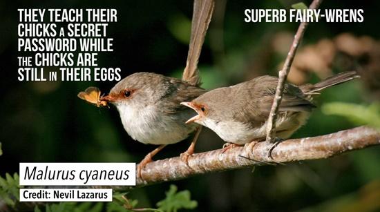 子育て丸投げ! 托卵する動物たちの不思議