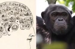 """人間とチンパンジーを交配すると… 実在した""""マッドサイエンティスト""""たちの狂気"""