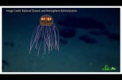 近年新たに発見された、深海に潜む奇抜な生物たち