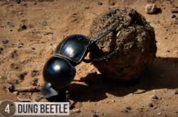 オスもメスも命がけ 驚くべき昆虫たちの性生活