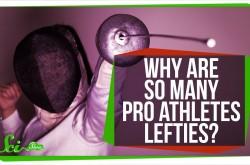 スポーツ選手に左利きが多いのはなぜか?