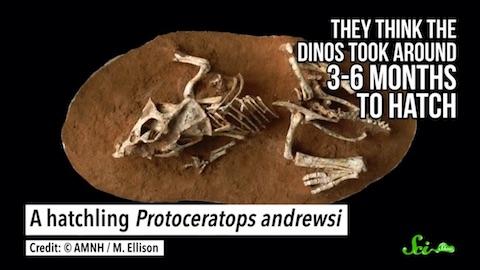 最新の研究でわかった、恐竜にまつわる3つの新事実