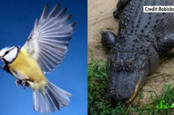 恐竜の鳴き声は一体どんな音だったのか?