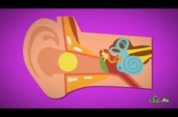 耳掃除はやはり危険? 知っておきたい耳垢の役割