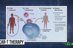 ジカウイルスが脳腫瘍を治す? がん治療の最新研究