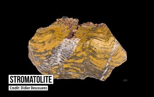 37億年以上昔の最古の化石が発見 太古の生命の痕跡を探る旅