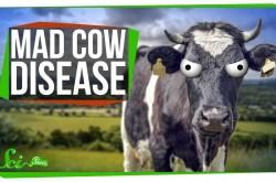 2000年代に話題になった「狂牛病」の現在