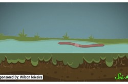 雨が降ると地上に出てくるミミズの生態を解説