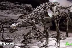 """恐竜の""""脳""""は発掘できるか?"""