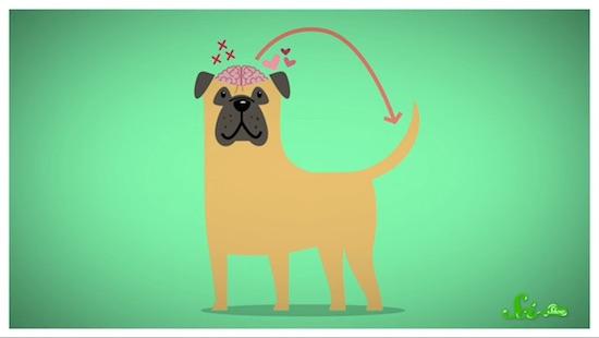 犬のしっぽによるコミュニケーション方法について解説