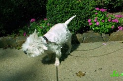 なぜ犬は濡れた体をブルブル震わせて乾かすのか?