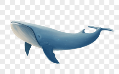 Whales PNG Images With Transparent Background Free Download On Lovepik com