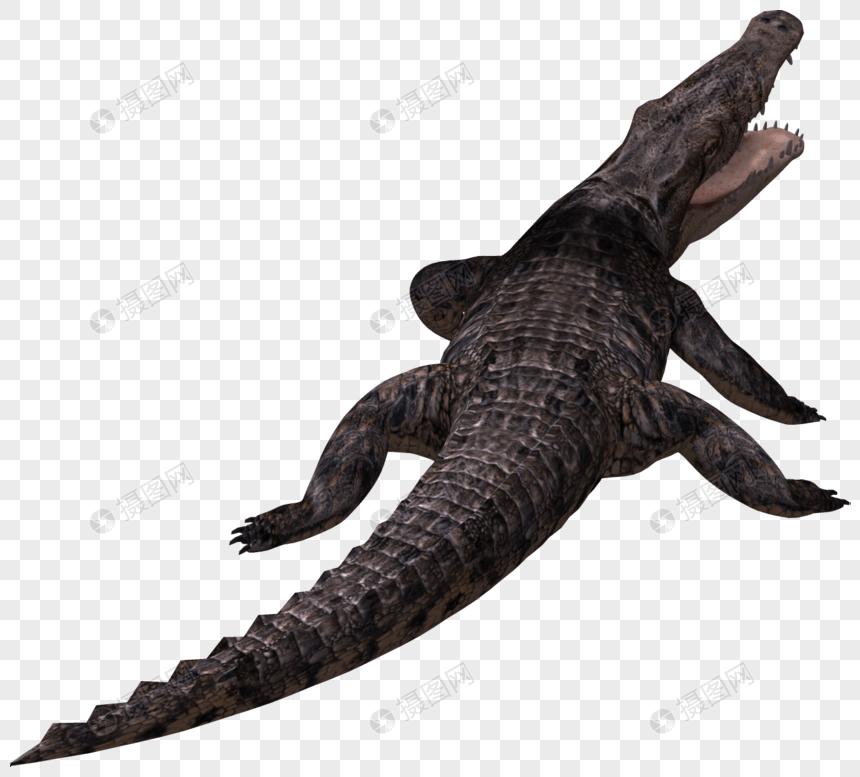 hd free crocodile material