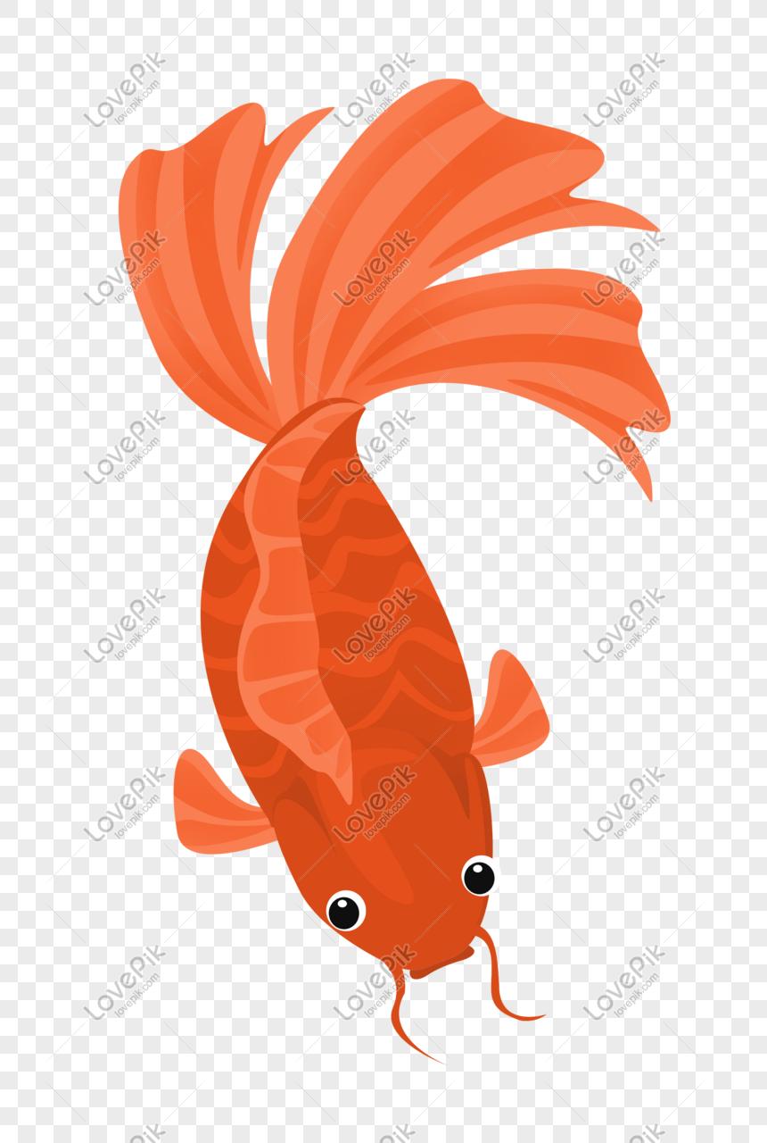 Ikan Mas Merah : merah, Merah, Oranye, Grafik, Gambar, Unduh, Gratis, Lovepik