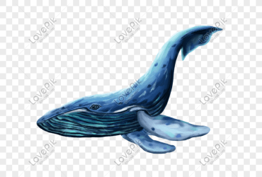 Whale png image picture free download 401553730 lovepik com