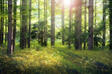 Fantasy forest background backgrounds image picture free download 401710629 lovepik com
