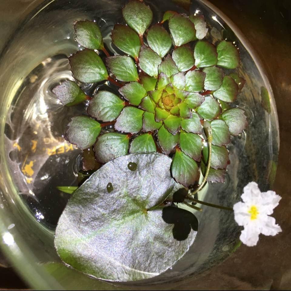 美しい花の畫像: 綺麗な花 言葉 木蓮