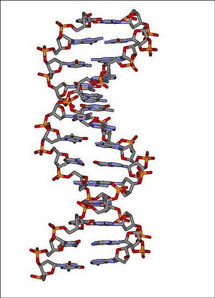 「幼兒遺傳智能障礙 」興大發現關鍵基因結構 - 即時新聞 - 自由健康網