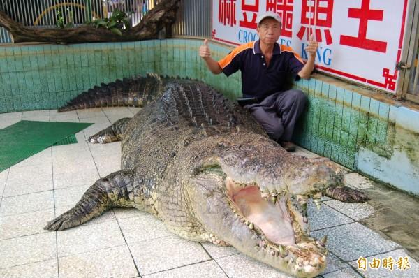 麻豆鱷魚王熄燈倒數了 鱷魚要送中國 - 社會 - 自由時報電子報
