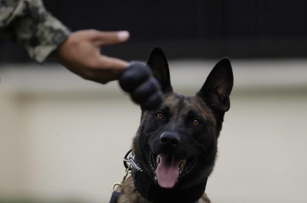 特種部隊遭IS圍攻 英雄狗狗衝入敵陣1打9 - 國際 - 自由時報電子報