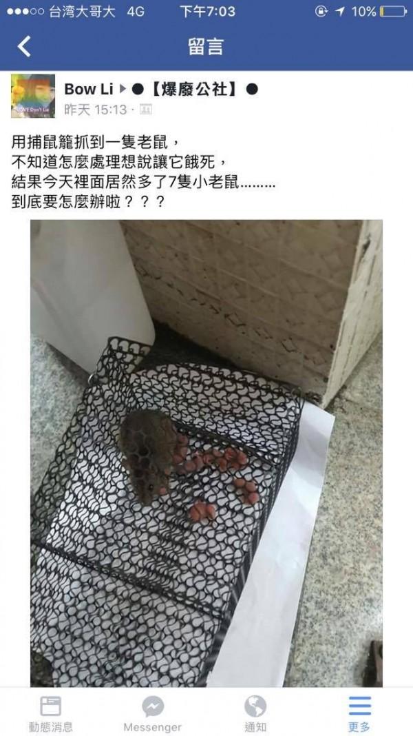 苦惱!老鼠抓1隻送7隻 網友發文求助 - 生活 - 自由時報電子報