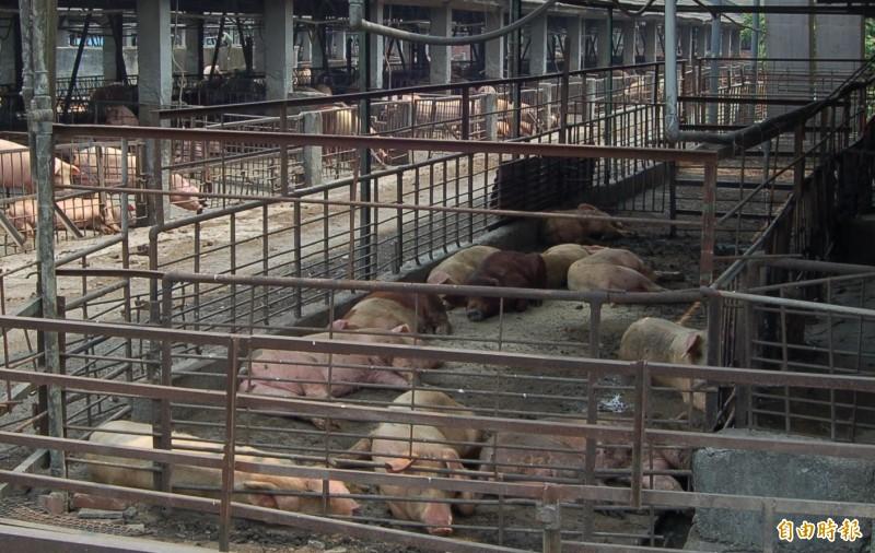 豬肉可外銷帶動漲勢?屏縣府:端午節行情 - 生活 - 自由時報電子報
