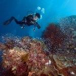 karang dipenuhi glass-fish