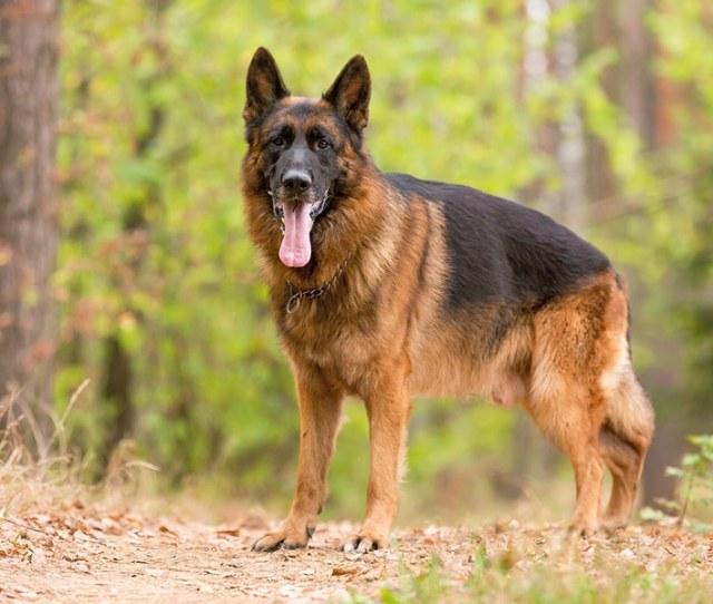 La Prova Di Als Risulta Utile Nella Ricerca Canina Di Malattia Di Neurodegenerative