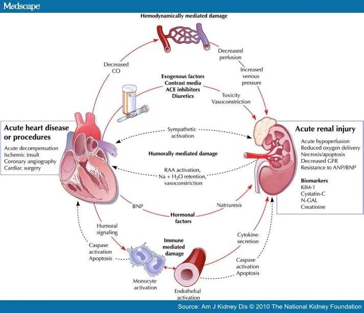 Atrial Natriuretic Factor; ANF; ANP; Atriopeptins; Auriculin; Natriuretic Peptides. Atrial; Atrial Natriuretic Peptides
