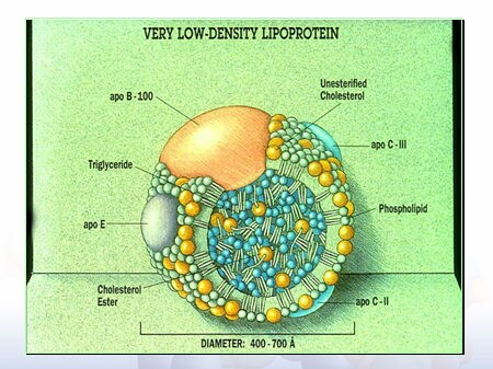 Opinions on very low density lipoprotein