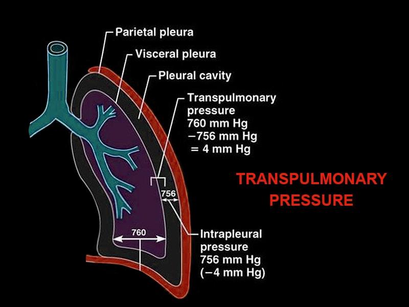 Medical Lab Results Diagram