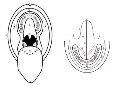 Oral Tissue Biopsy: Overview, Periprocedural Care, Technique