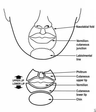 Dermatologic Aspects of Lip Reconstruction: Background