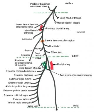Radial Nerve Block: Overview, Indications, Contraindications