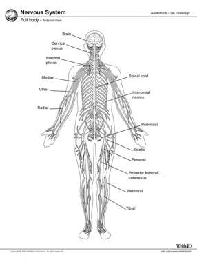 Central Nervous System Anatomy: Overview, Gross Anatomy