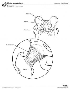 Hip Joint Anatomy: Overview, Gross Anatomy