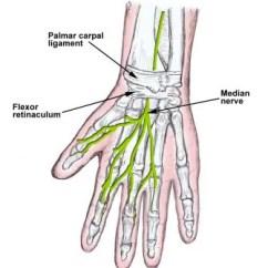 Hand Nerves Diagram 2008 Dodge Avenger Serpentine Belt Median Nerve Block Overview Indications Contraindications Wrist Anatomy