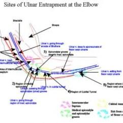 Ulnar Nerve Diagram Caravan Consumer Unit Wiring Neuropathy Background Anatomy Pathophysiology Schematic Of Elbow Region With 5 Main Sit