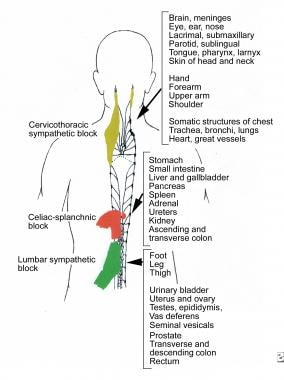 Therapeutic Injections for Pain Management: Types of