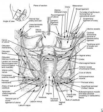 Ureteral Injury During Gynecologic Surgery: Background