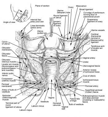 Female Urethra Anatomy: Overview, Gross Anatomy