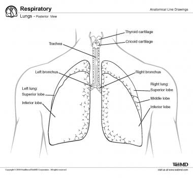 Examples of lung sounds