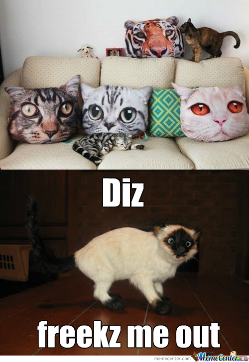 Pillow Memes Best Collection of Funny Pillow Pictures