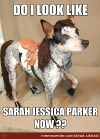 Dog Squirrel Costume Meme