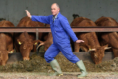 Tai Chi for the Cows