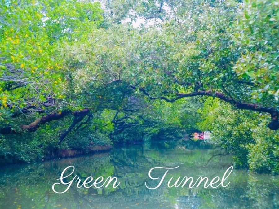 台南安南區》帶孩子遊台江、體驗四草綠色隧道台版亞馬遜河的生態之旅