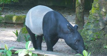 新加坡動物園 親子遊的好去處