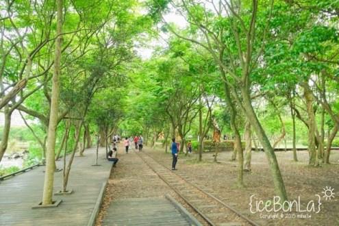 宜蘭》親子旅遊好景點:羅東林場 充滿綠樹 飄散清涼木頭香 來散步吧!