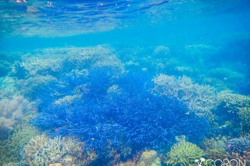 科隆島》必看的沉船和美到爆炸珊瑚花園 我去過的7個科隆浮潛點總整理