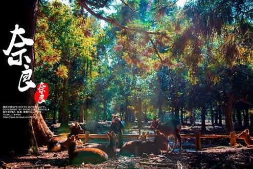 日本》奈良小鹿一日遊二日遊旅行路線 全年度節慶整理